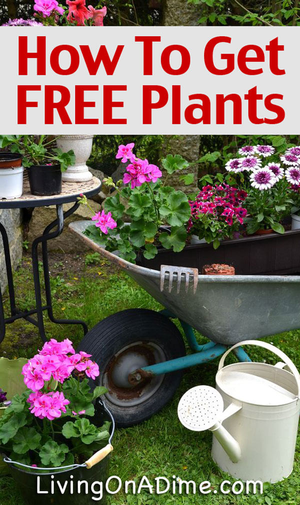 How to get free or cheap plants and seeds for Cheap garden plants