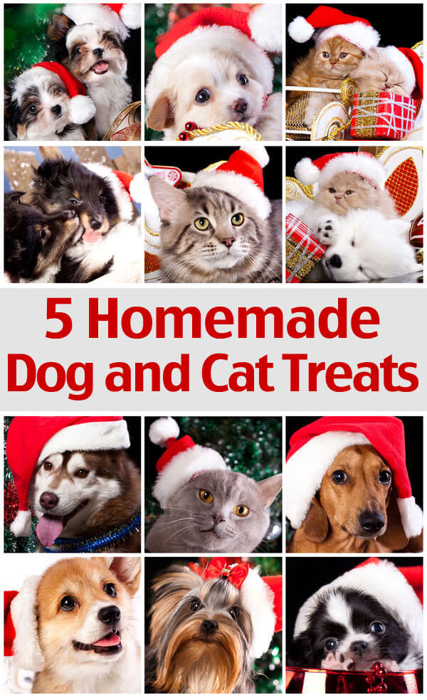 5 Homemade Treats Recipes For Your Dog And Cat