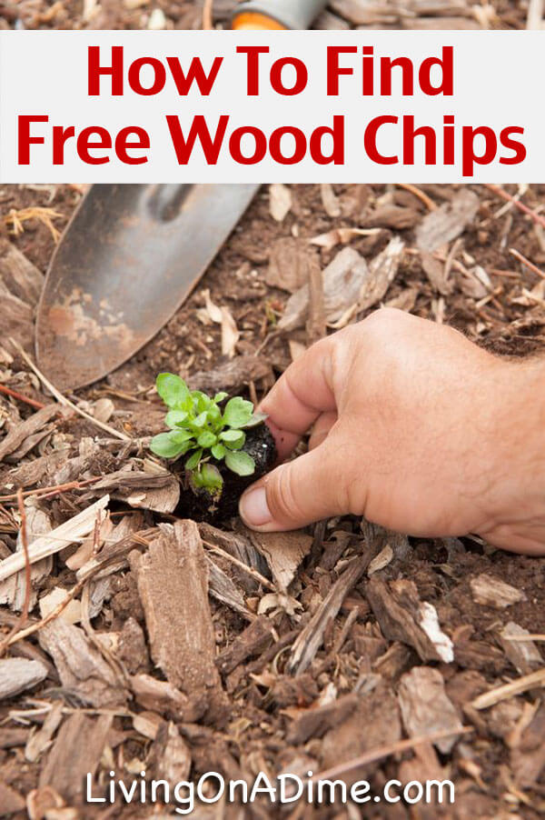 Wood Chips For Landscaping ~ Wood chips landscaping outdoor goods