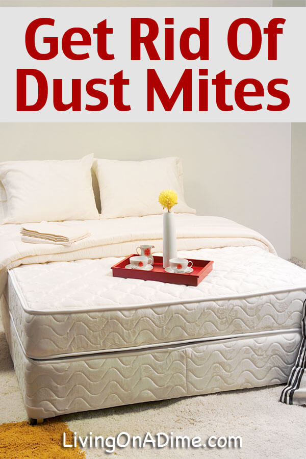 How To Get Rid Of Dust Mites Living On A Dime