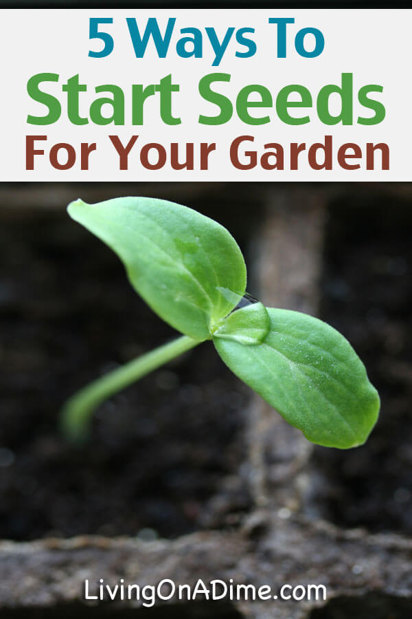 5 Ways To Start Seeds For Your Garden