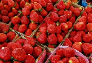 strawberries-e1275000019763-309x210