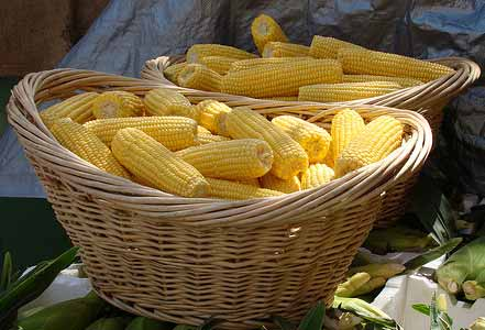 Fresh corn - how to make frozen corn