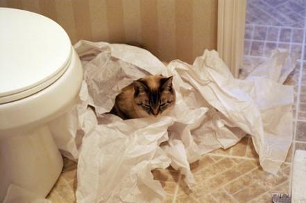 cat in TP