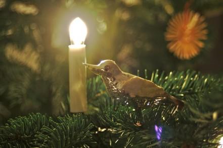 Christmas Greenery