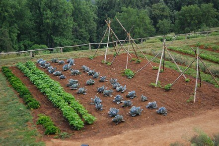vegtable garden