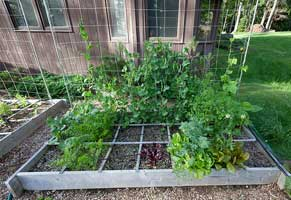 garden staking plants - pole and string garden trellis