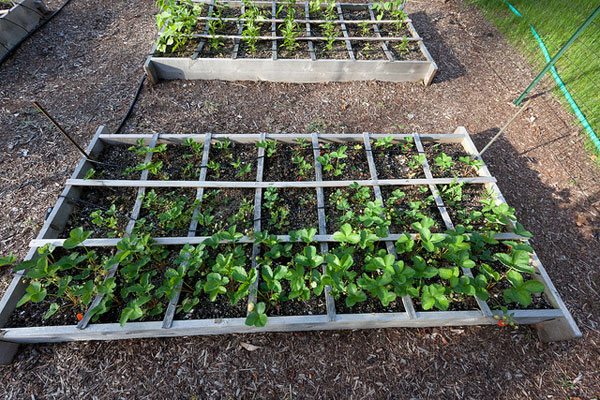 Grow your own vegetables in a square foot garden