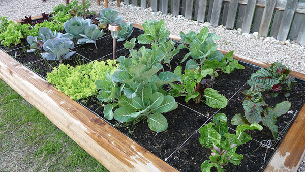 produce - vegetables in a square foot garden