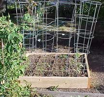 how to start a garden - staking and tomato cages