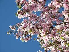 sunny-spring-morning