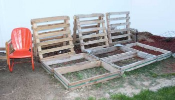 recycling in the garden - pallet trellises