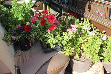 flower-deal_4546