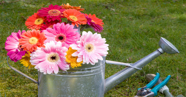 10 Garden Tips For The Best Garden EVER