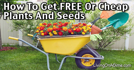 How To Get FREE Or Cheap Plants and Seeds